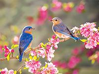 Ekaart: Kevad