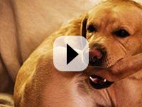 Ekaart: Naljakad videod