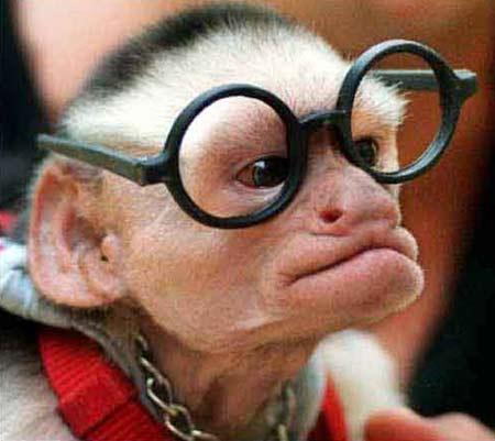 Ahv on prillipapa