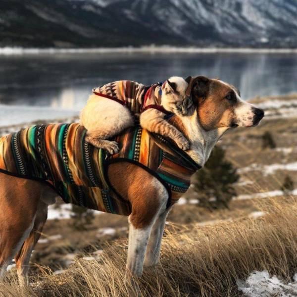 Kassi ja koera sõprus