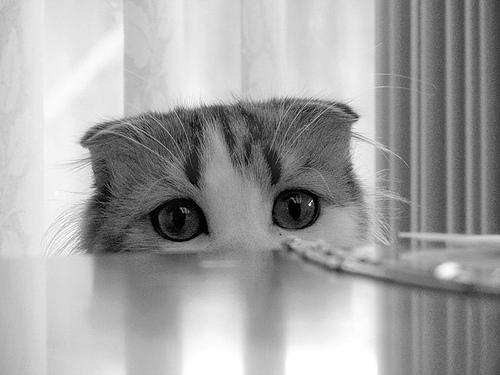 Olen väike kassipoeg