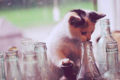 Kassipoeg pudelitega