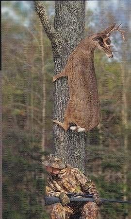 Kits puu otsas