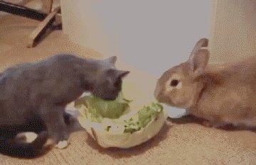 Kuidas kadedus ajab ka kassi kapsas sööma