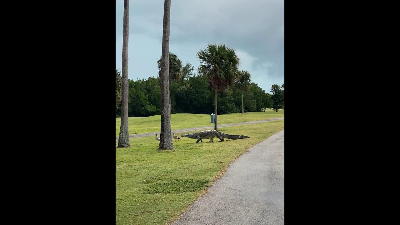 Vaata kuidas pardid ja krokodill läbi saavad