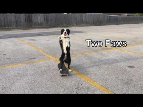 Osav koer rulaga