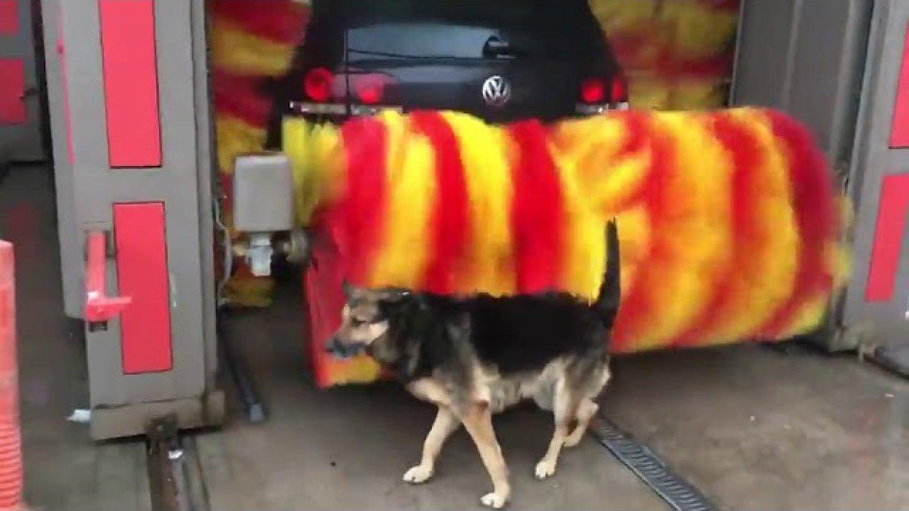 Koer käib autopesulas massaaži seansil