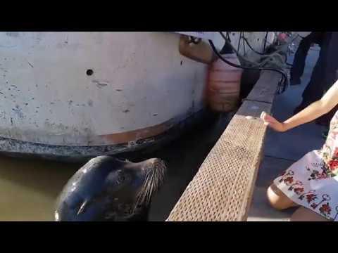 Näljane merilõvi lastejahil