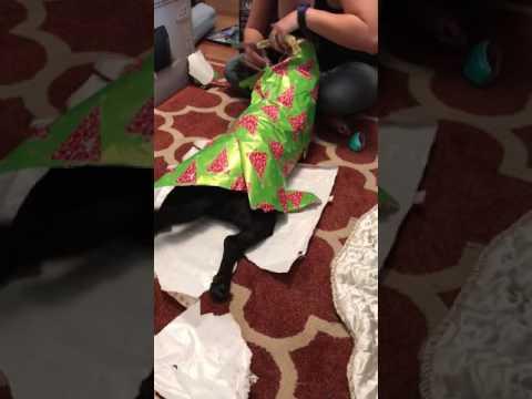 Pakendatud koer