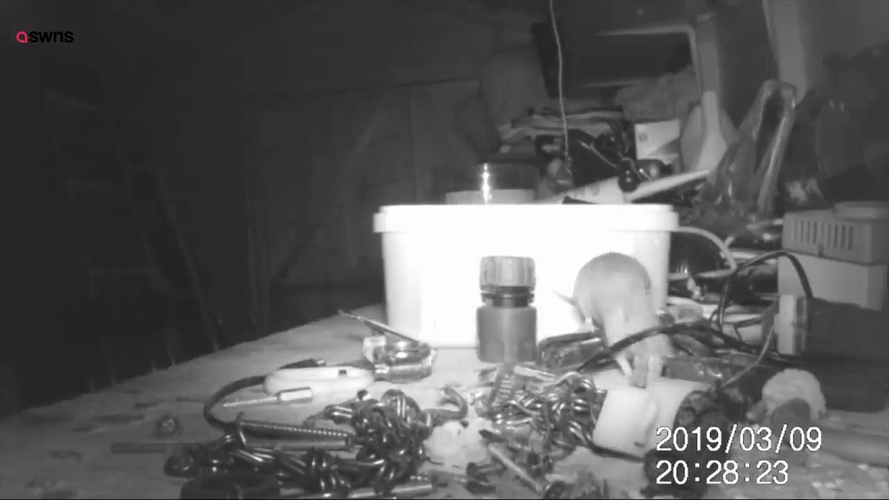 Hiir garaažis tööriistu sorteerimas