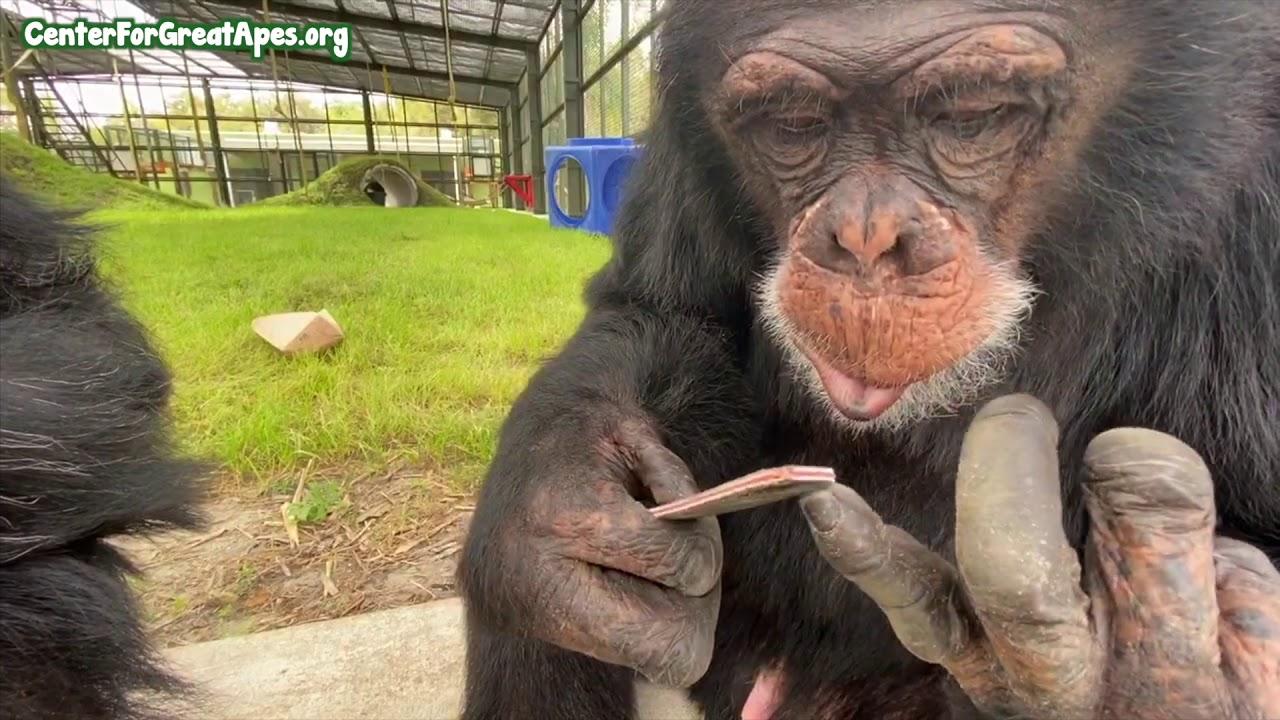 Vaata kuidas ahv oma küüsi viilib