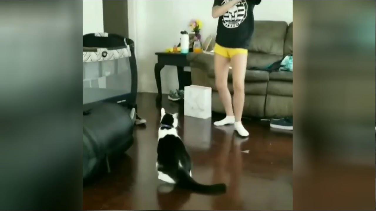 Sellele kassile meeldib kakelda