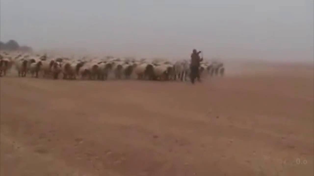 Loomaarmee rivisammu astumas