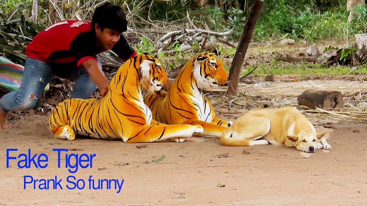 Kohe näha, et koerad on enne ka tiigrit näinud