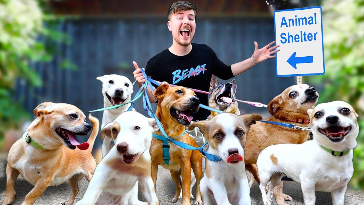 Kuidas koerte varjupaigast kõik koerad adopteeriti