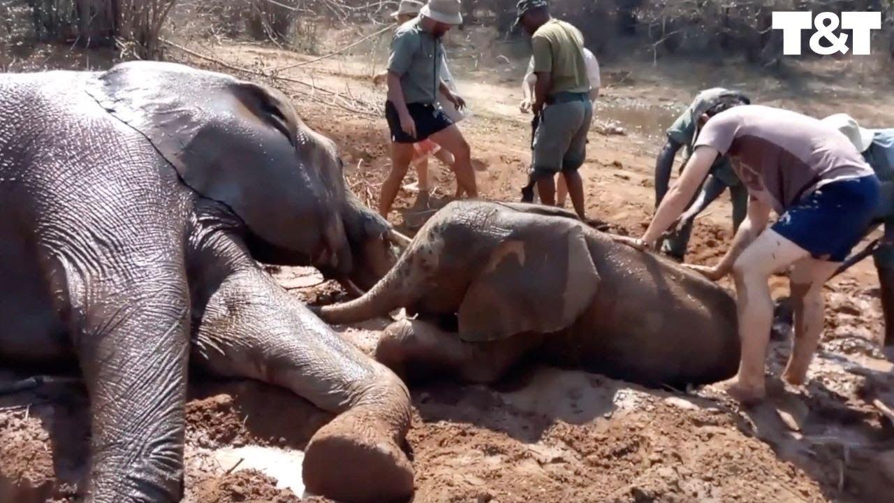 Vaata kuidas inimesed päästavad väikese elevandipoja