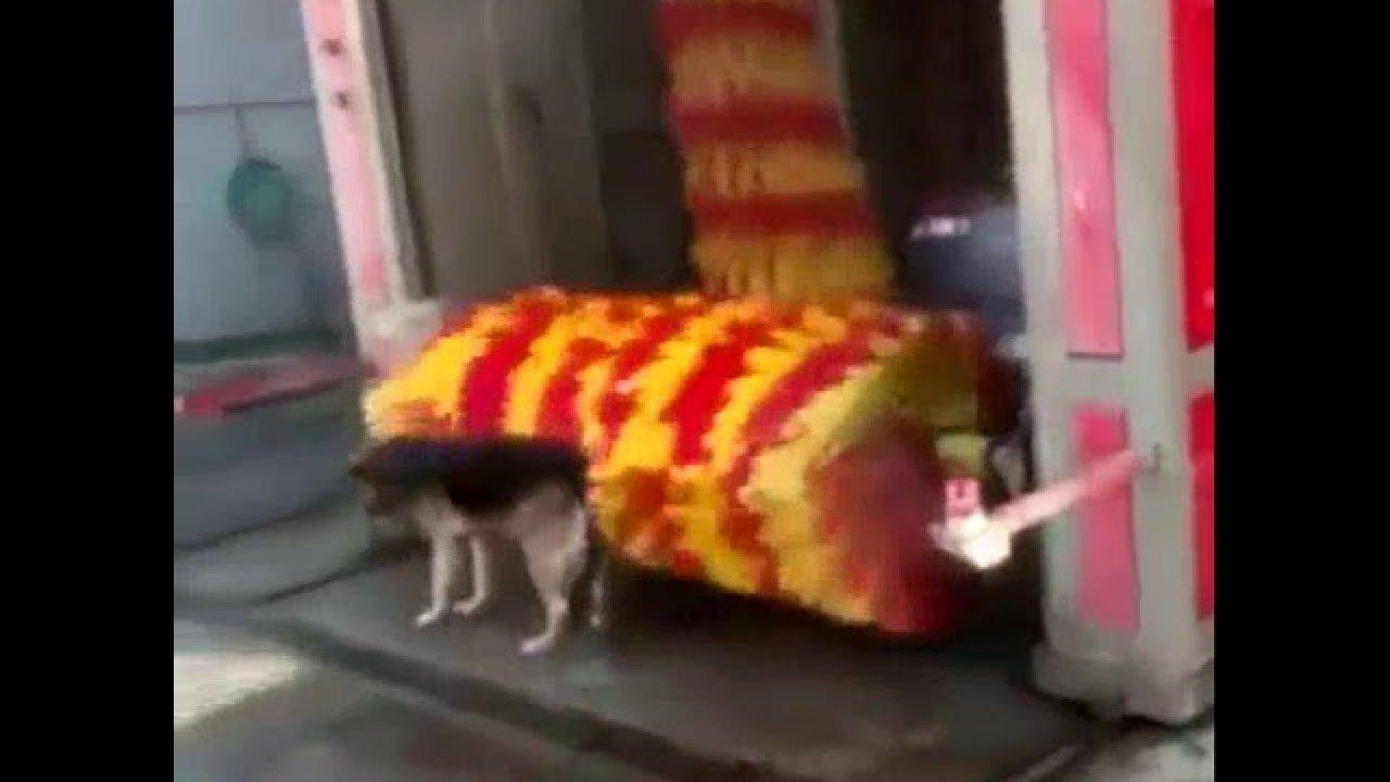 Koer kasutab autopesulat massaažisalongina