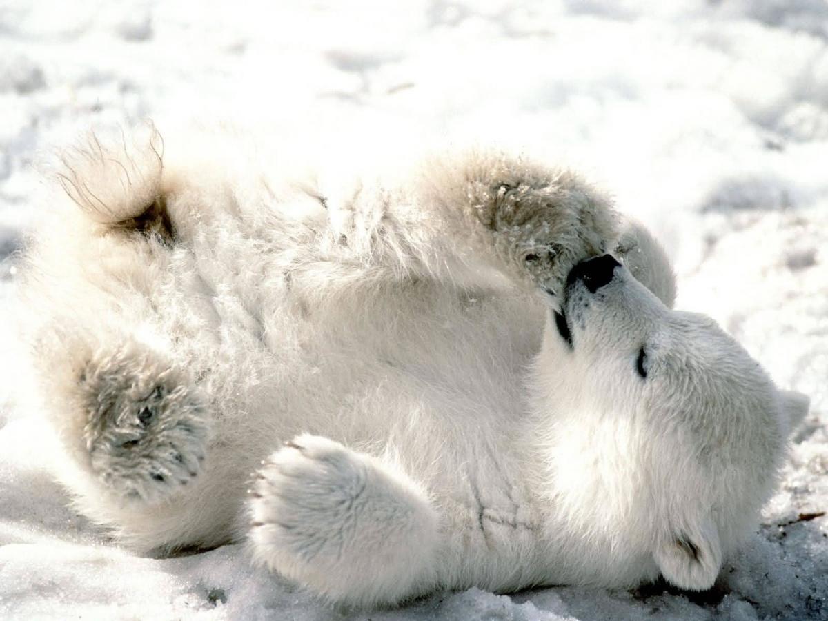 Jääkaru nahk on hoopis must